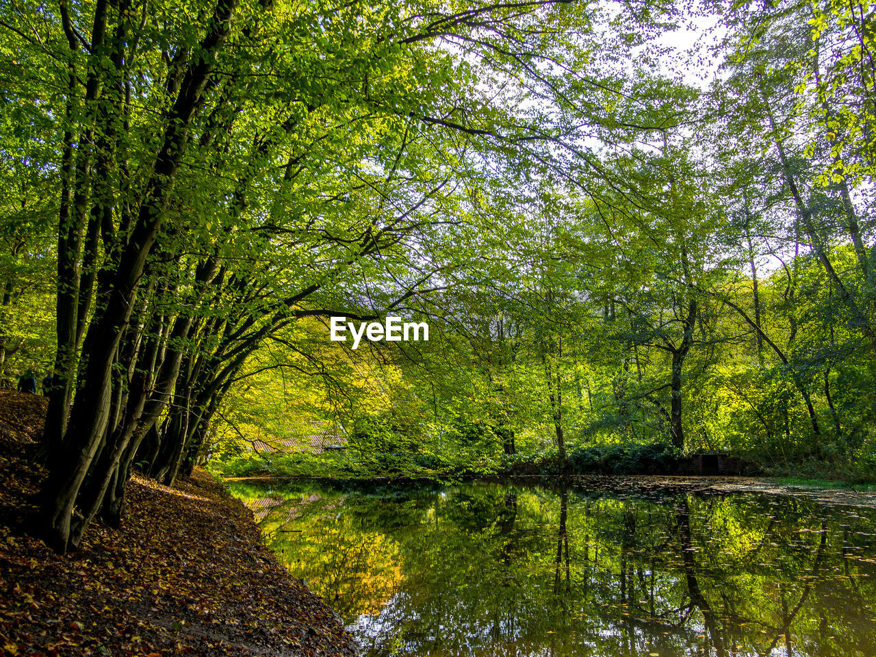 tree, plant, forest, water, tranquility, nature, beauty in nature, land, growth, lake, green color, scenics - nature, tranquil scene, no people, reflection, woodland, day, branch, outdoors