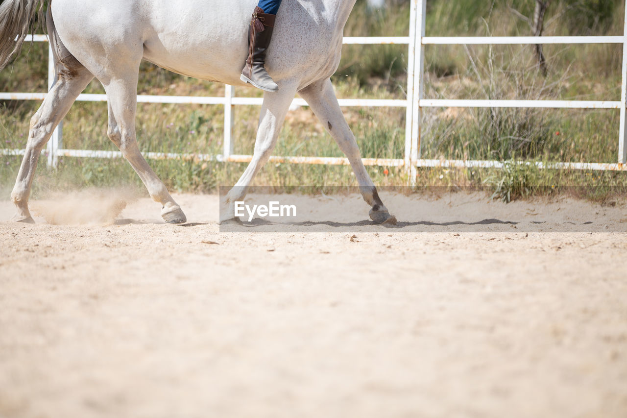 VIEW OF HORSE RUNNING ON LAND