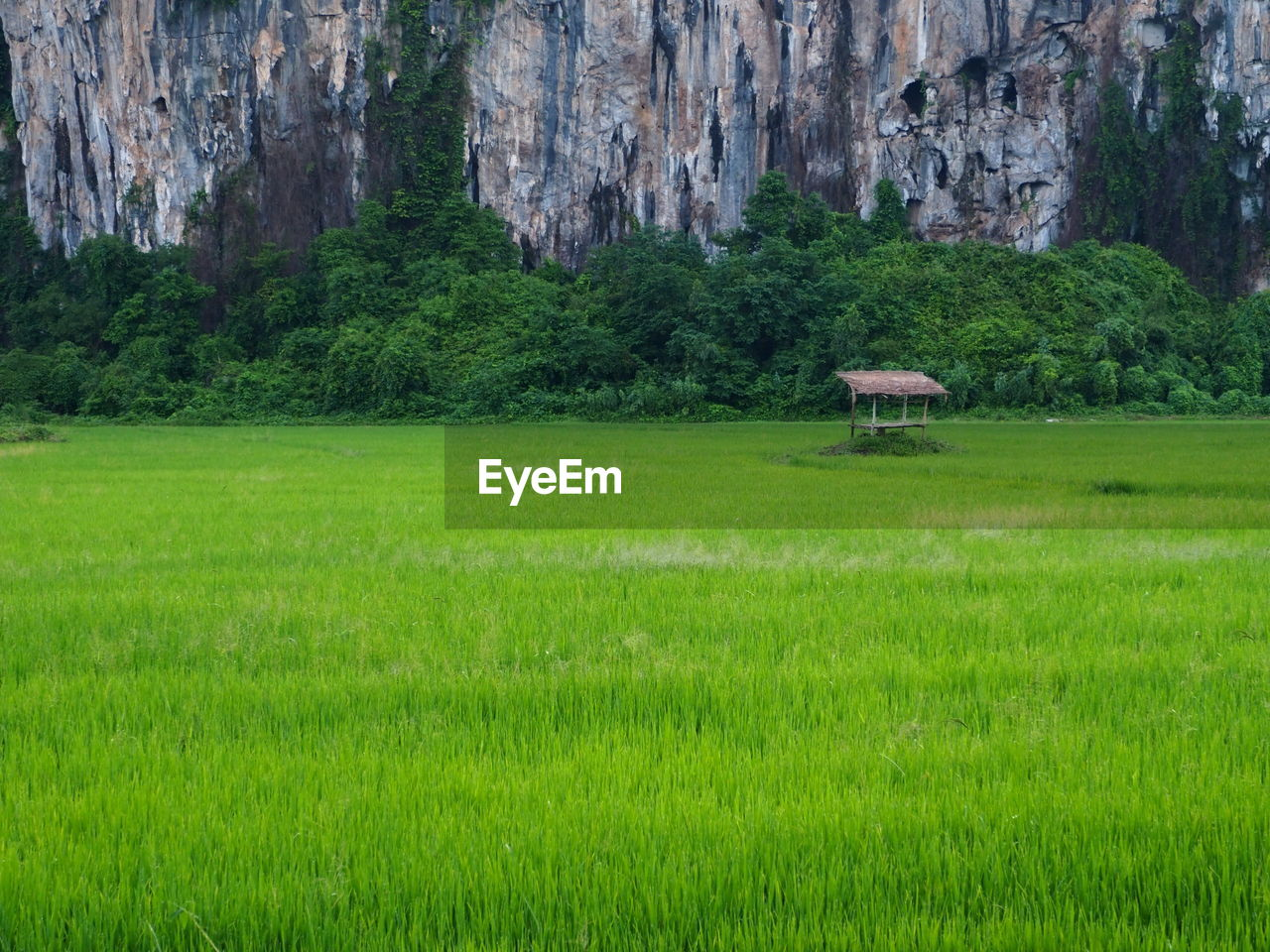 plant, grass, green color, land, tree, architecture, nature, environment, landscape, beauty in nature, day, built structure, scenics - nature, no people, field, tranquil scene, tranquility, mountain, building, foliage, outdoors