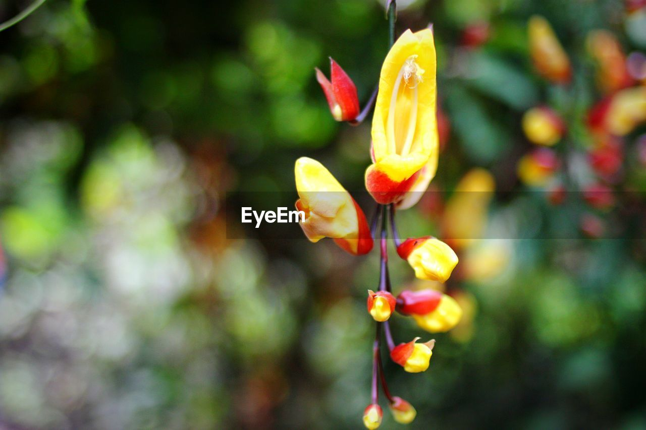 flower, growth, petal, freshness, nature, beauty in nature, plant, focus on foreground, no people, blooming, outdoors, day, flower head, fragility, close-up