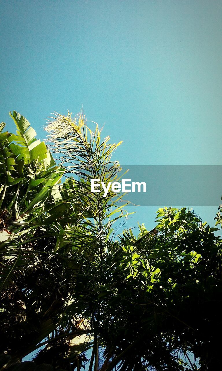 green color, growth, leaf, clear sky, low angle view, tree, nature, no people, day, blue, outdoors, beauty in nature, plant, freshness, sky, close-up