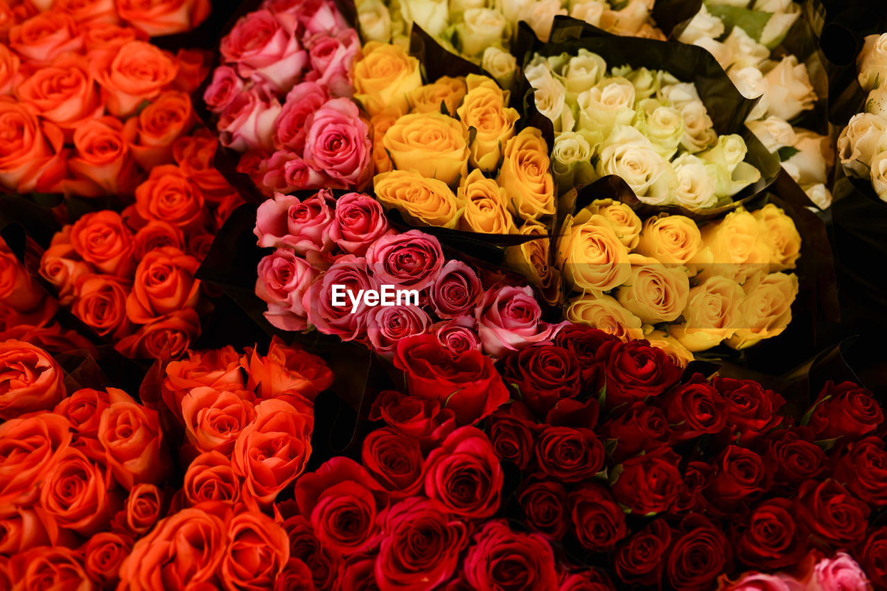 flower, retail, rose - flower, flower market, bouquet, freshness, for sale, fragility, flower shop, beauty in nature, variation, petal, full frame, backgrounds, flower head, market, large group of objects, nature, small business, no people, choice, gift, multi colored, indoors, arrangement, close-up, business, day, florist