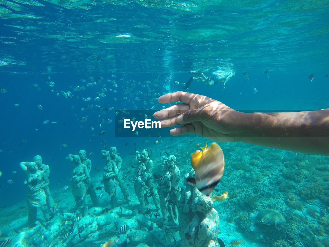 water, sea, underwater, real people, one person, undersea, swimming, human hand, nature, human body part, lifestyles, hand, animal wildlife, blue, animals in the wild, sea life, day, outdoors, marine, turquoise colored, school of fish
