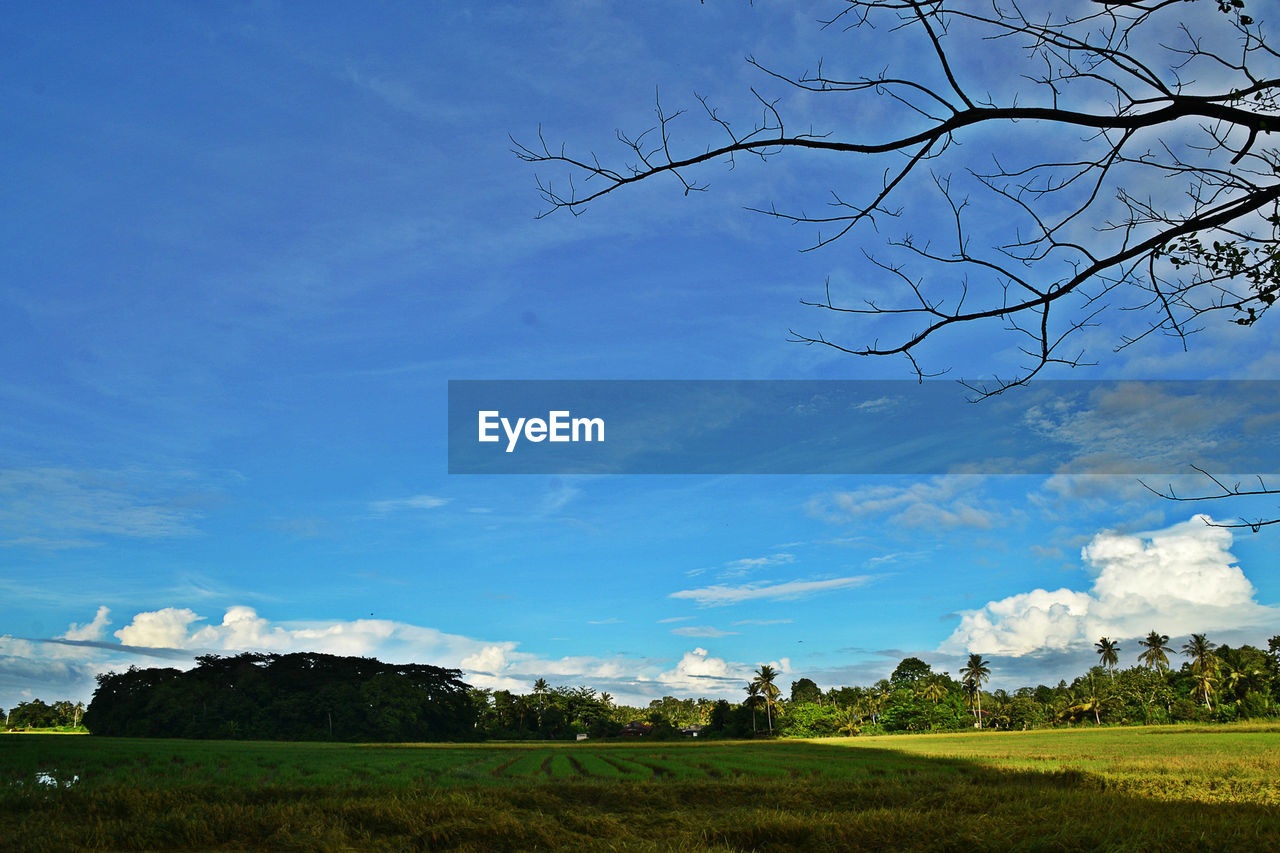sky, tree, beauty in nature, nature, landscape, day, no people, field, cloud - sky, tranquility, tranquil scene, outdoors, scenics, bare tree