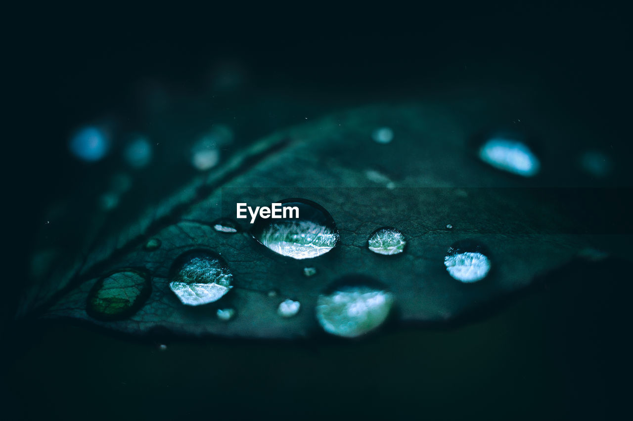 drop, wet, water, close-up, selective focus, no people, plant part, leaf, raindrop, purity, rain, freshness, nature, vulnerability, fragility, beauty in nature, plant, day, black background, outdoors, dew, floating on water, rainy season, leaves