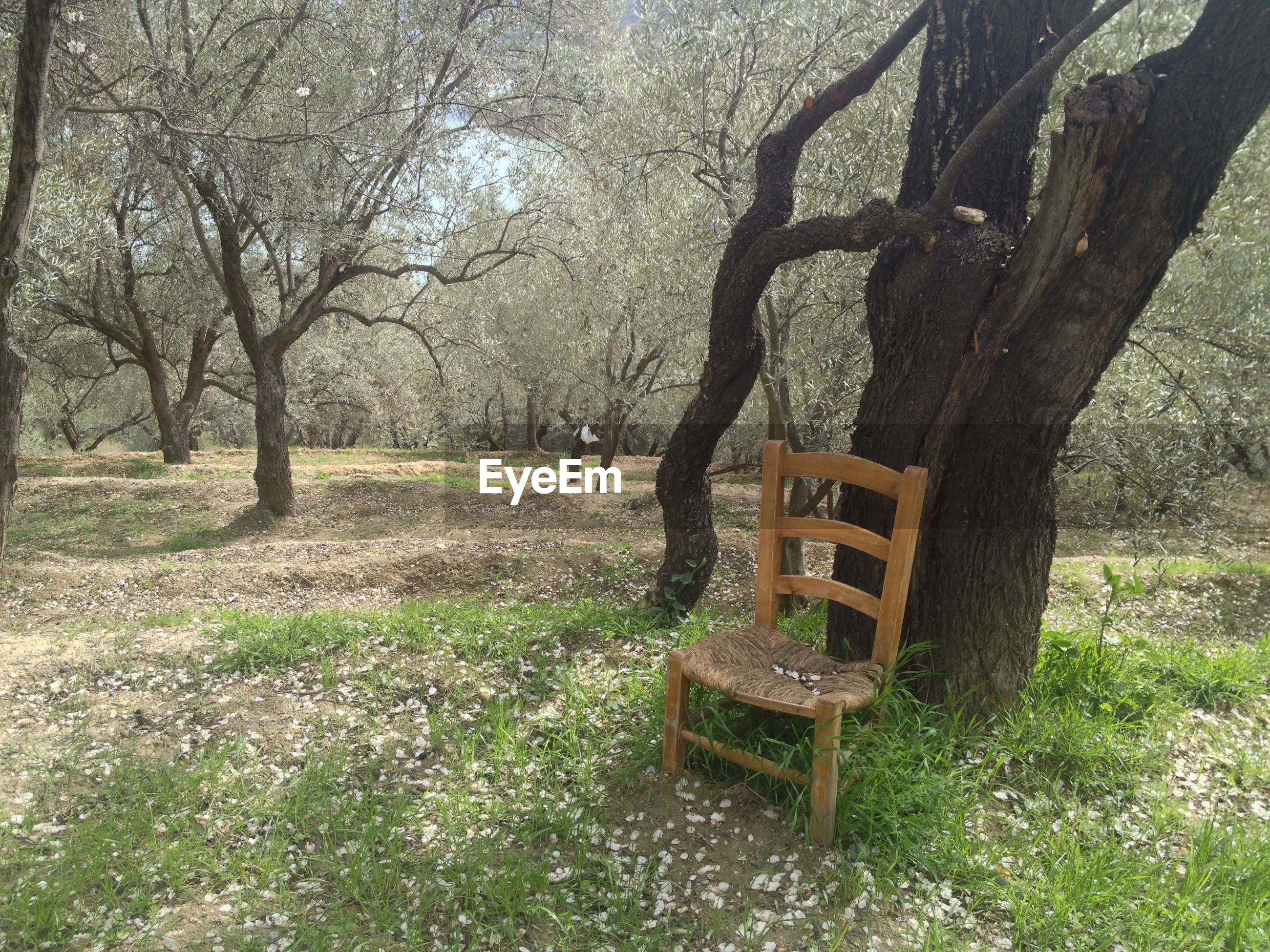 Chair and trees in park