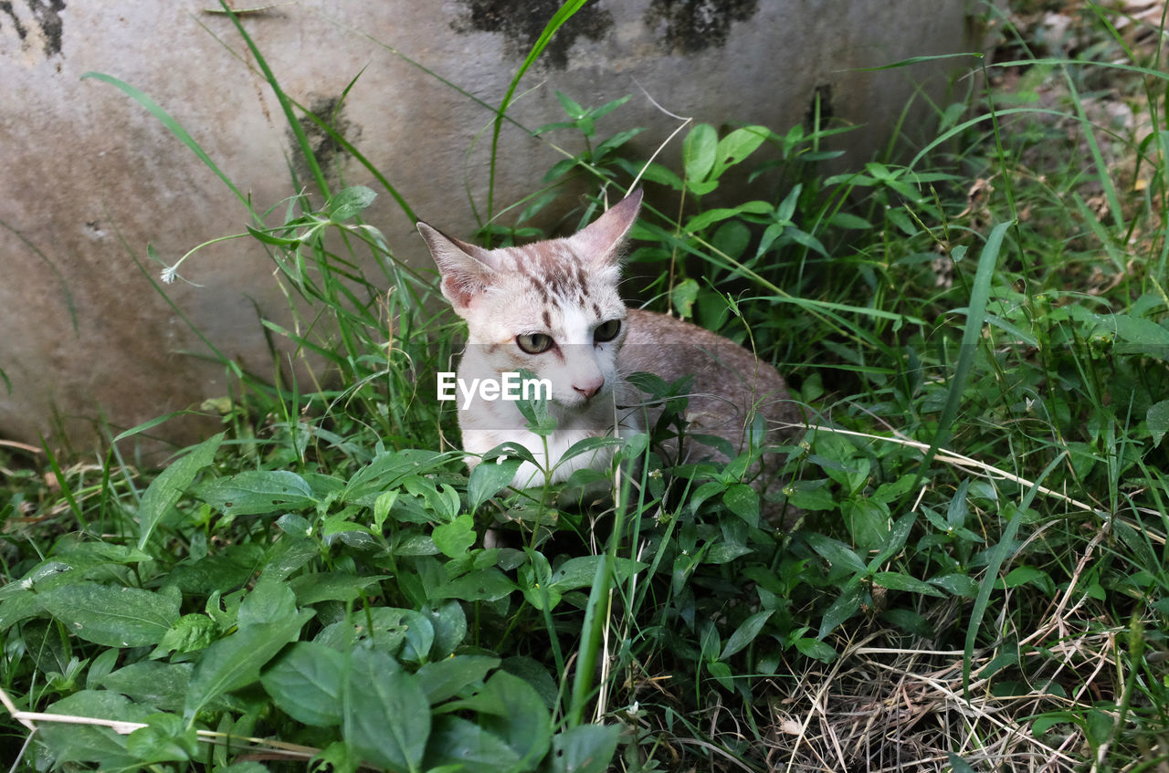 animal themes, mammal, one animal, animal, domestic, domestic animals, plant, pets, domestic cat, cat, feline, vertebrate, portrait, looking at camera, green color, growth, nature, land, day, no people, whisker