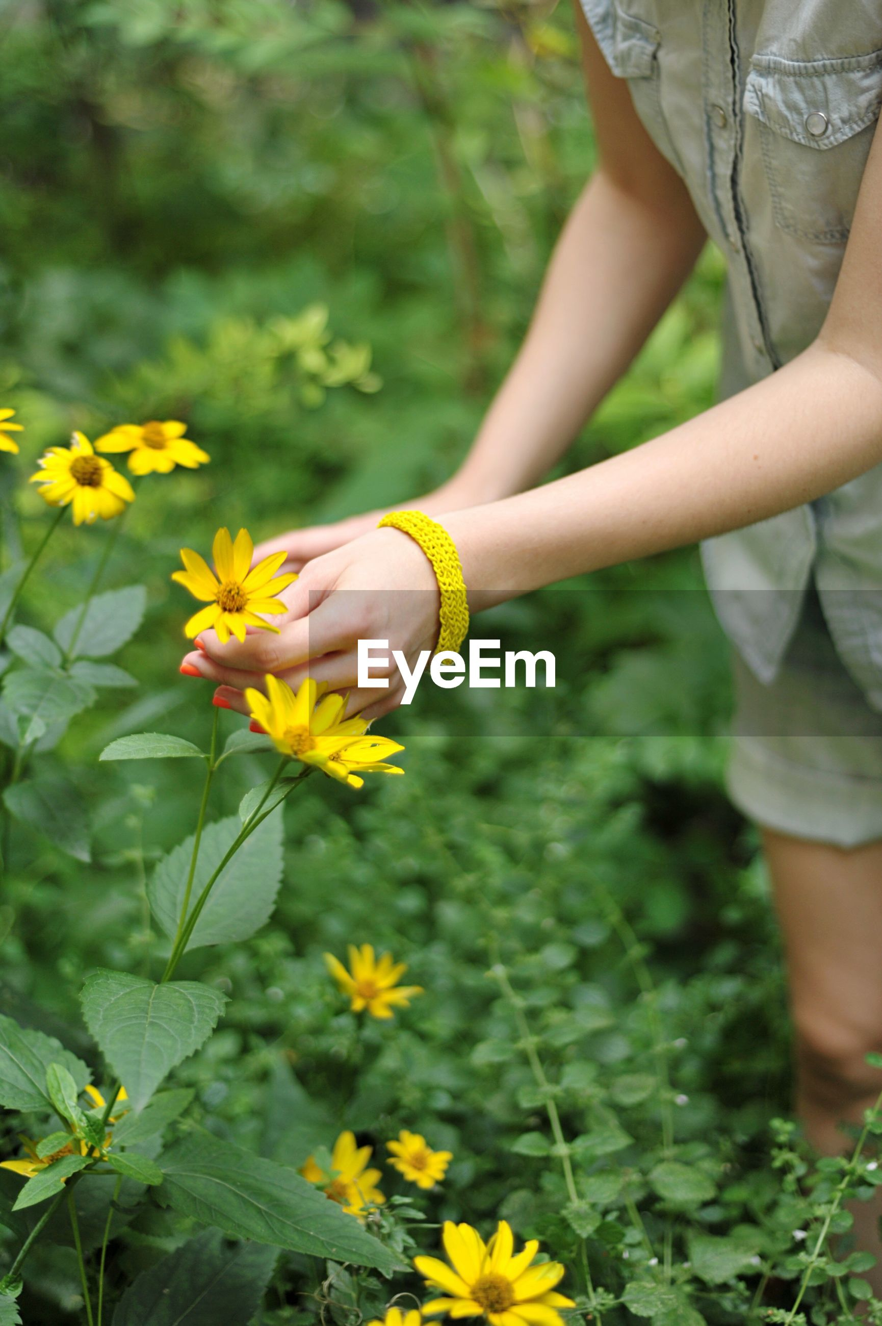 Cropped image of woman plucking yellow flowers