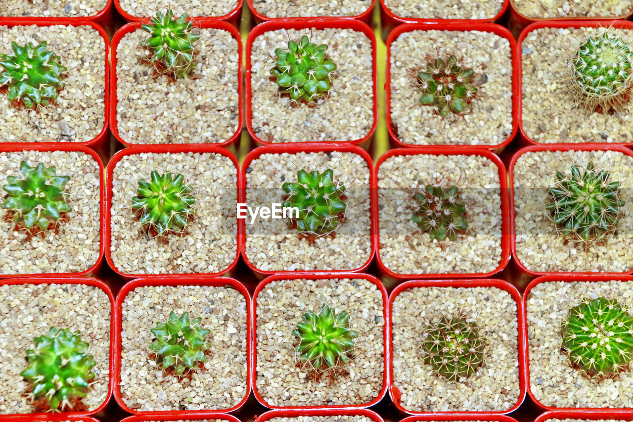 Full frame shot of cactus potted plants
