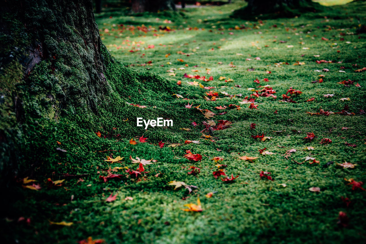 nature, growth, tranquility, outdoors, day, tree, no people, green color, autumn, leaf, grass, red, close-up, forest, tree trunk, beauty in nature