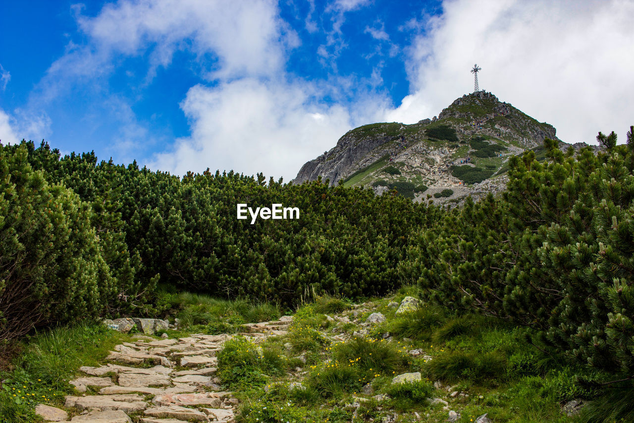 sky, cloud - sky, plant, tree, mountain, beauty in nature, nature, scenics - nature, tranquil scene, tranquility, green color, rock, day, solid, non-urban scene, no people, rock - object, landscape, outdoors, growth, mountain peak