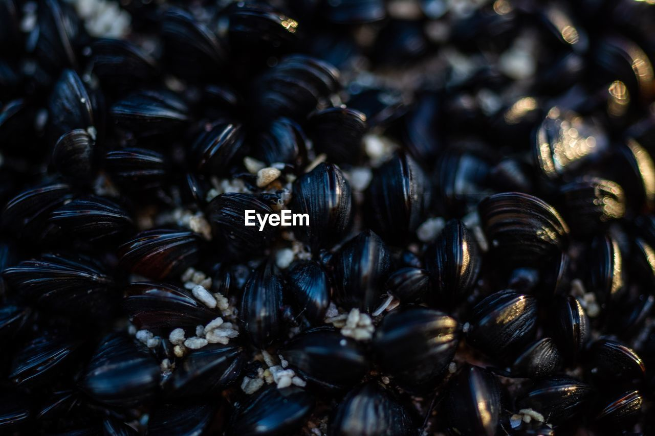 full frame, backgrounds, close-up, no people, selective focus, abundance, food and drink, animal wildlife, animals in the wild, large group of animals, group of animals, food, wellbeing, freshness, large group of objects, mussel, animal, healthy eating, still life, high angle view, marine