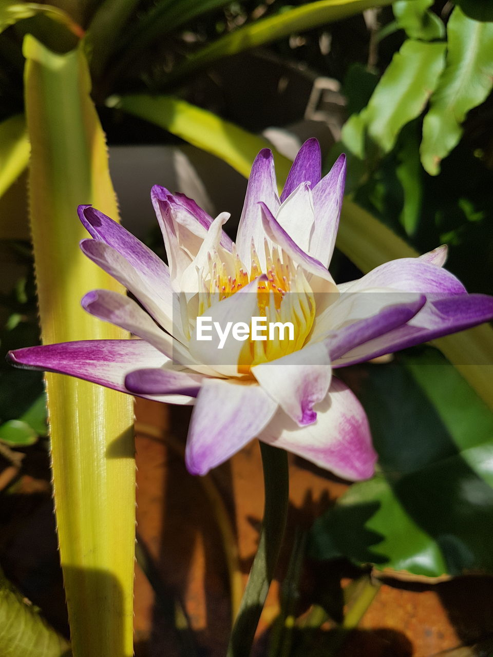flowering plant, flower, petal, freshness, plant, vulnerability, fragility, beauty in nature, growth, flower head, inflorescence, close-up, purple, water lily, nature, no people, day, leaf, pollen, focus on foreground, iris, outdoors, springtime, lotus water lily, crocus