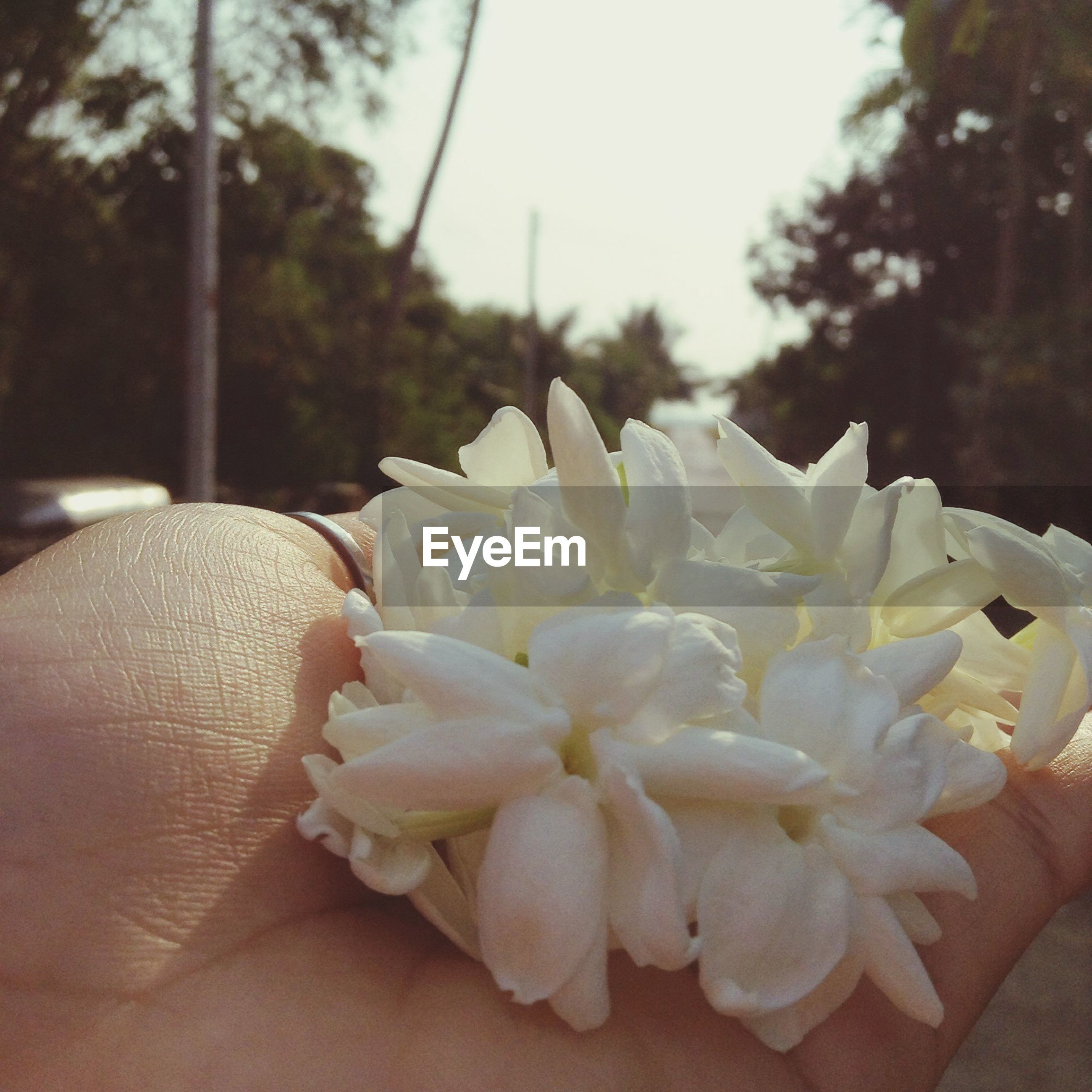 flower, petal, fragility, focus on foreground, freshness, close-up, flower head, white color, person, growth, beauty in nature, part of, nature, day, white, blooming, cropped, outdoors, tree, one person