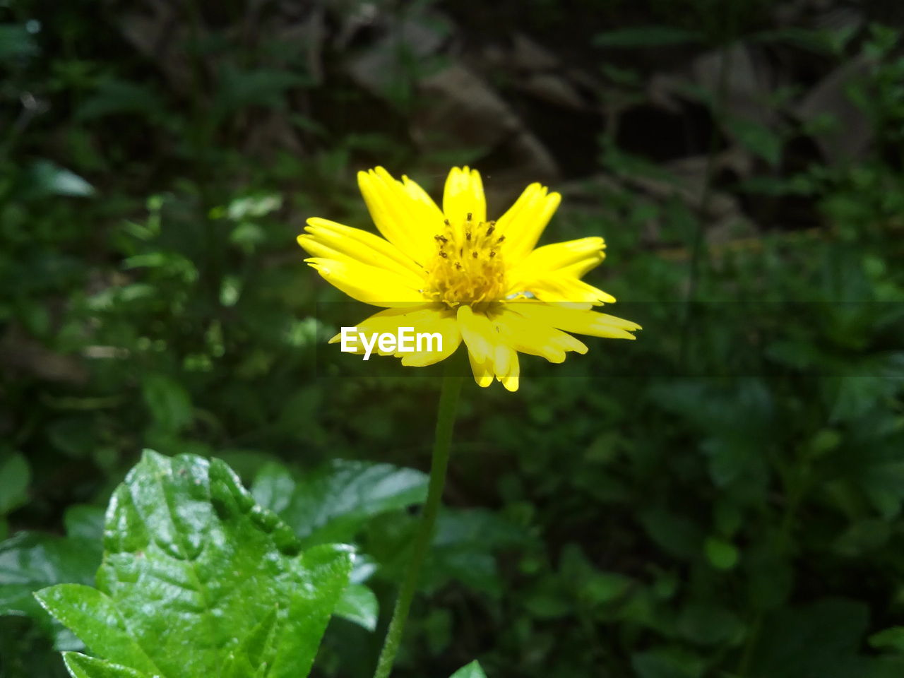 flower, yellow, nature, growth, petal, plant, beauty in nature, blooming, fragility, freshness, flower head, no people, outdoors, close-up, day