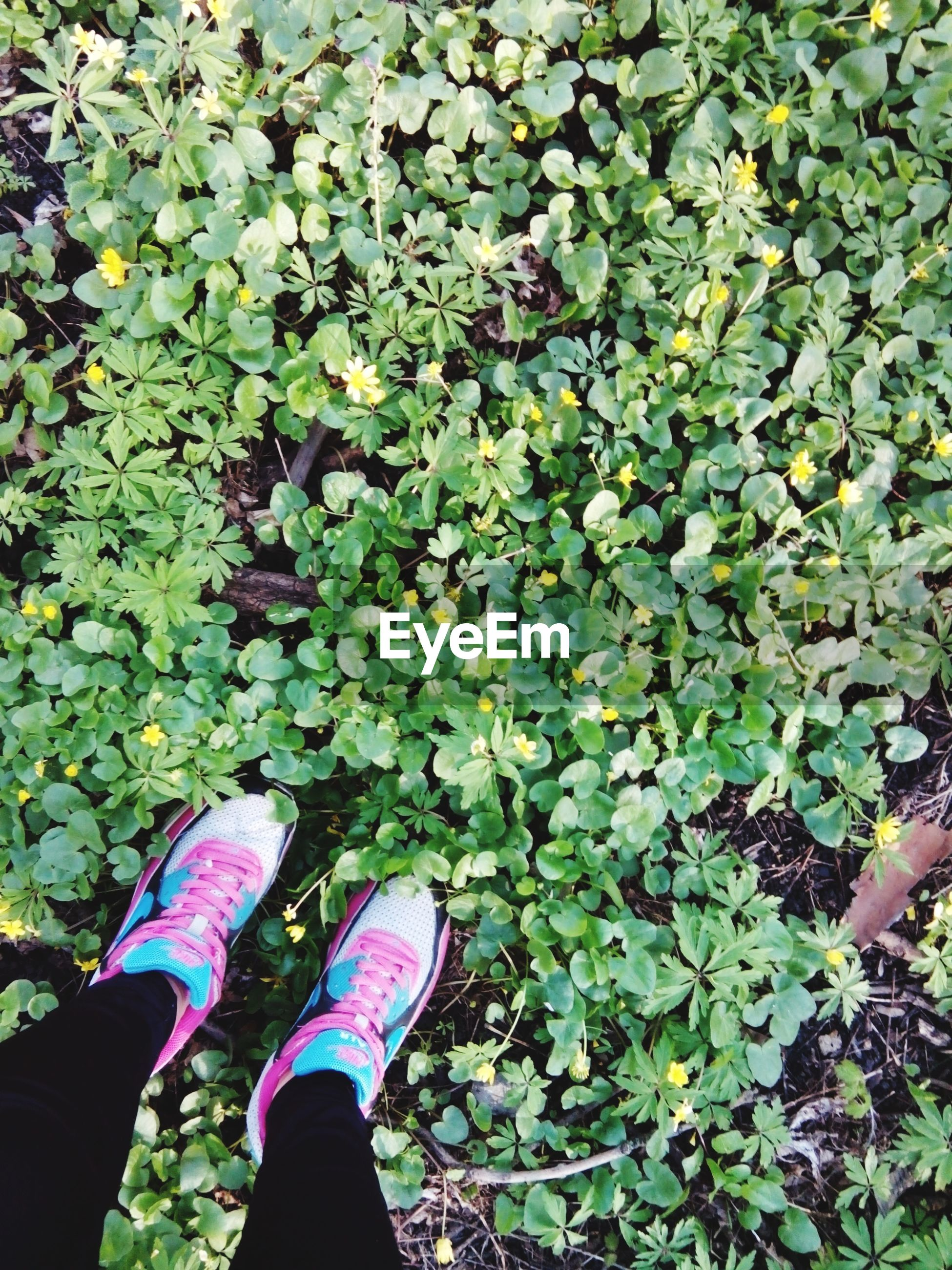 low section, person, personal perspective, leaf, high angle view, shoe, lifestyles, standing, growth, green color, leisure activity, plant, nature, human foot, unrecognizable person, men, day