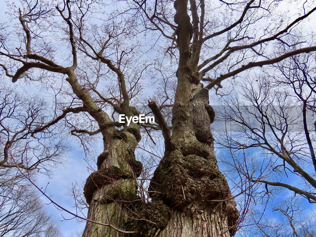tree, plant, bare tree, low angle view, branch, sky, trunk, tree trunk, nature, tranquility, no people, day, growth, outdoors, beauty in nature, clear sky, non-urban scene, tall - high, scenics - nature, backgrounds, bark, tree canopy