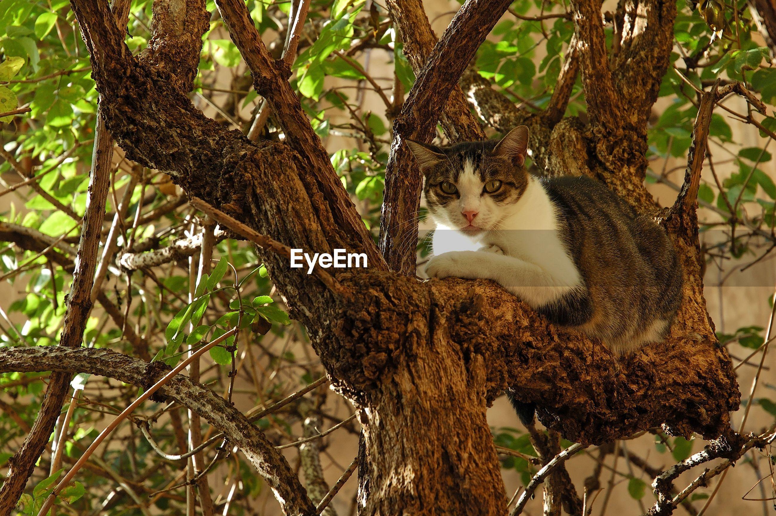 PORTRAIT OF CAT ON TREE