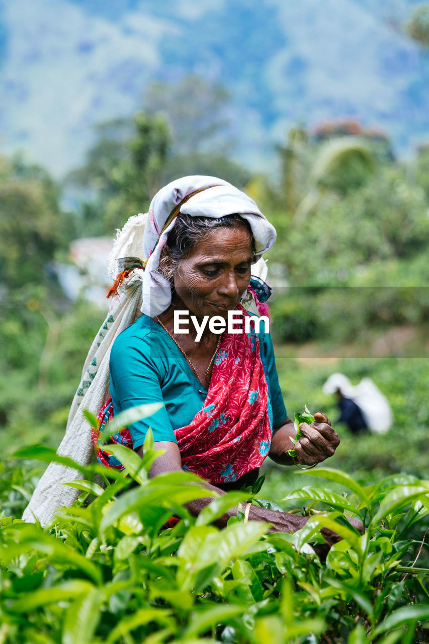 plant, one person, adult, growth, nature, real people, women, day, holding, glasses, working, front view, green color, selective focus, lifestyles, outdoors, agriculture, three quarter length, focus on foreground, gardening, farmer