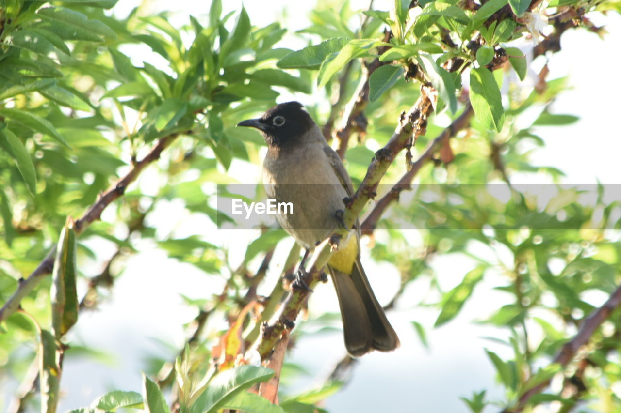 tree, animals in the wild, one animal, animal themes, bird, perching, leaf, nature, animal wildlife, branch, low angle view, no people, day, plant, growth, beauty in nature, outdoors, close-up
