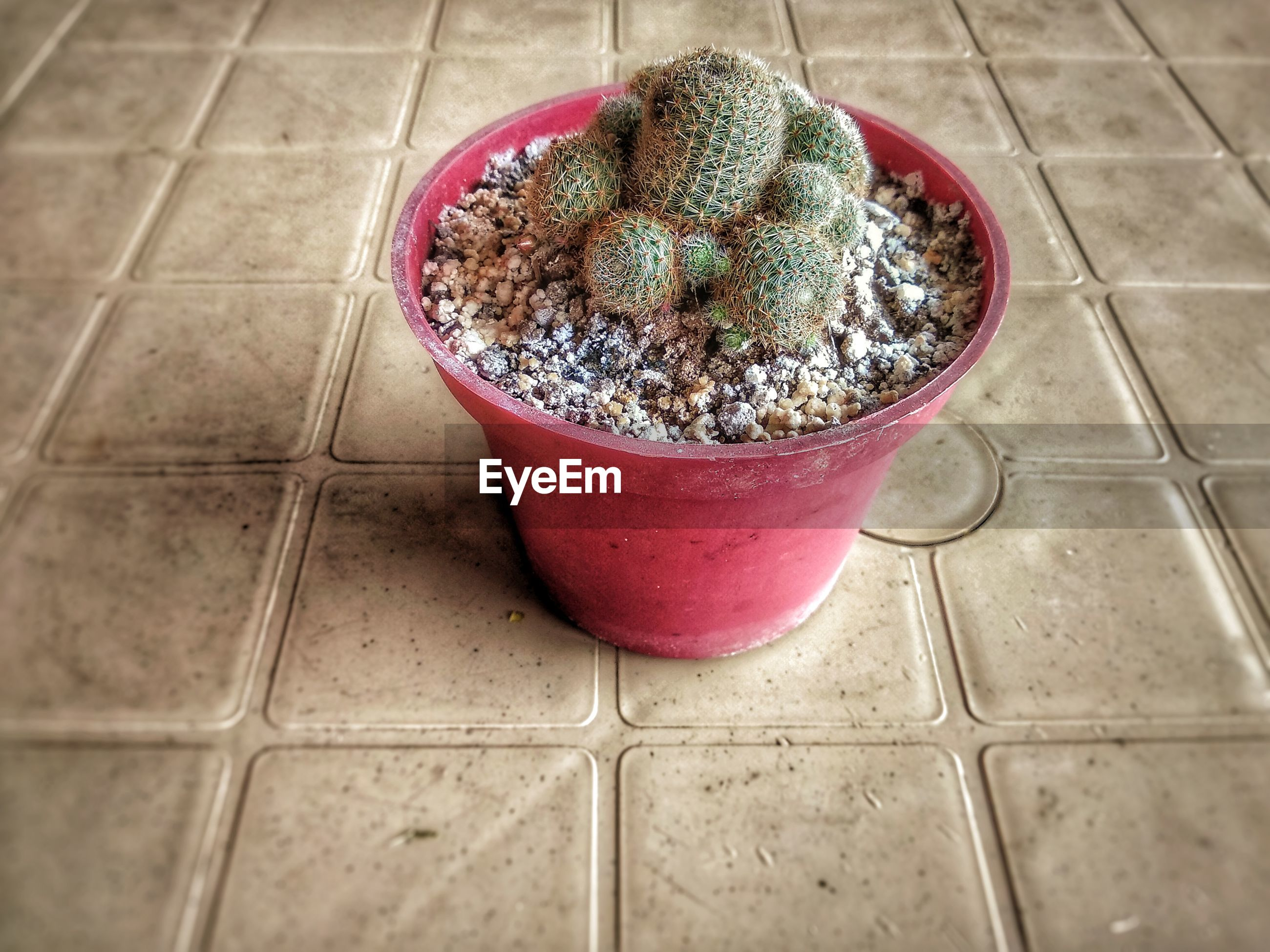 Close-up of potted plant on floor