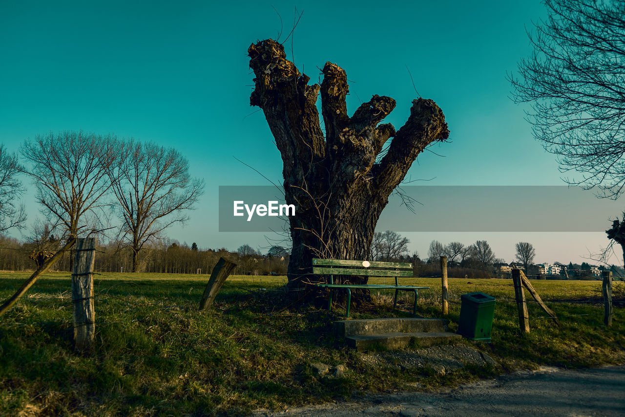 plant, sky, tree, nature, no people, boundary, day, bare tree, fence, barrier, land, field, tranquility, landscape, grass, environment, outdoors, blue, clear sky, tranquil scene, dead plant, digital composite