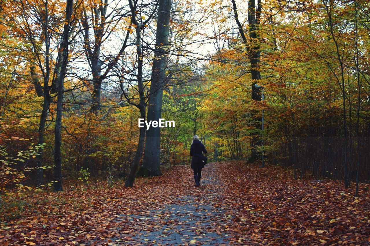Rear view of woman walking amidst trees in forest during autumn