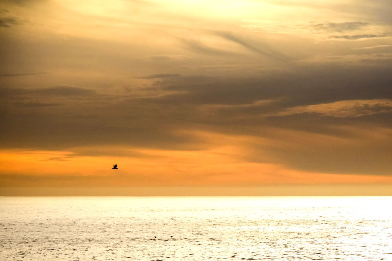 sky, sea, water, cloud - sky, sunset, horizon over water, horizon, scenics - nature, beauty in nature, tranquility, bird, tranquil scene, vertebrate, flying, animal, orange color, animal themes, nature, waterfront, no people, outdoors