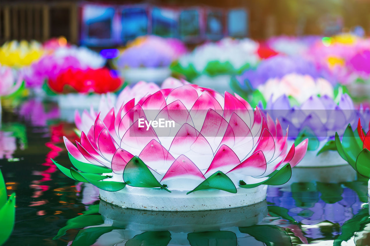 flower, flowering plant, water lily, beauty in nature, no people, plant, pink color, close-up, water, focus on foreground, freshness, lake, fragility, nature, vulnerability, multi colored, lotus water lily, day, flower head, floating on water, purple