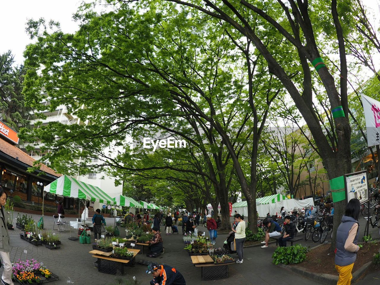 tree, plant, group of people, crowd, architecture, city, building exterior, nature, large group of people, built structure, real people, street, men, leisure activity, day, transportation, women, building, market, outdoors