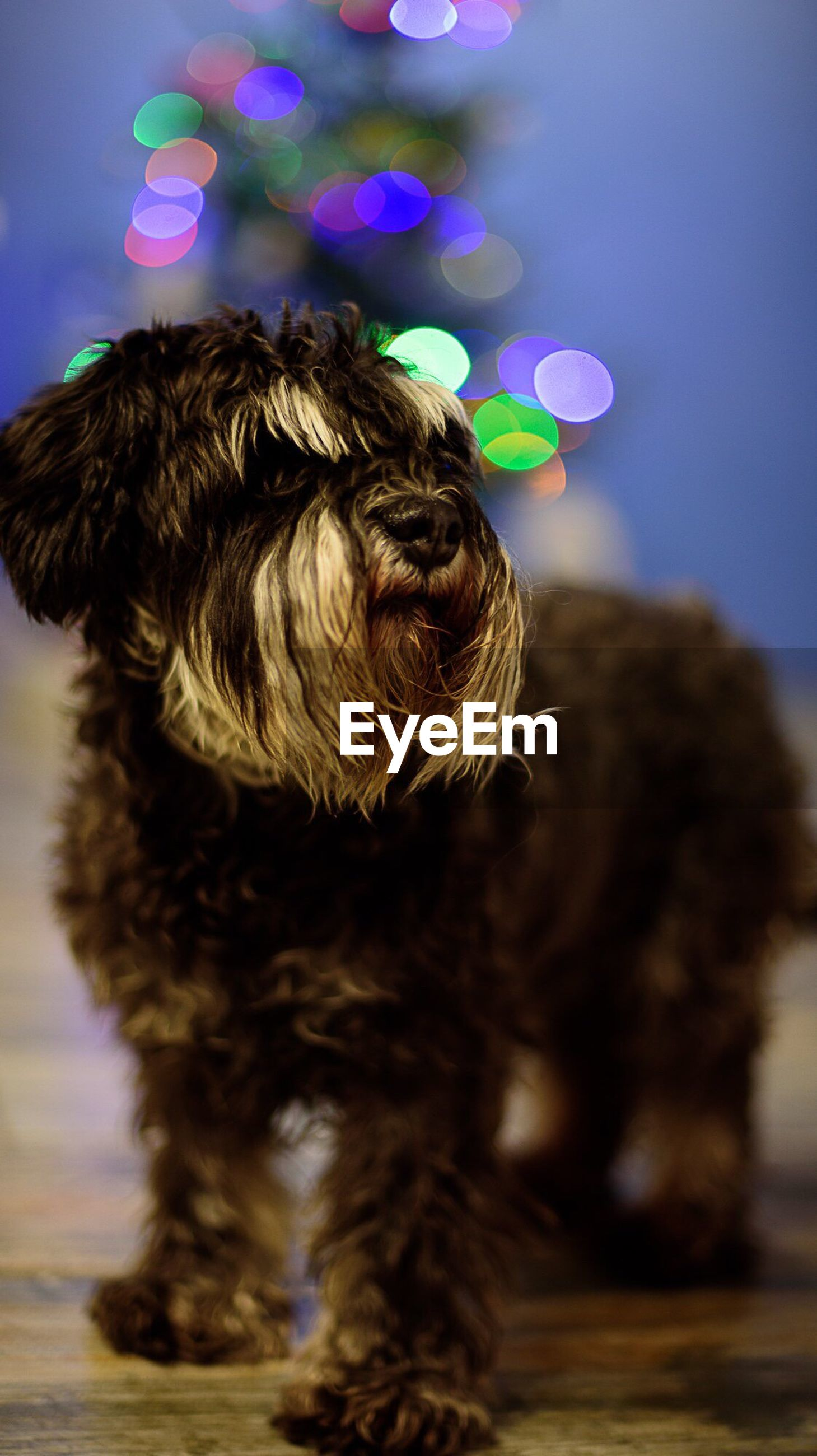 CLOSE-UP OF DOG WITH ILLUMINATED LIGHT