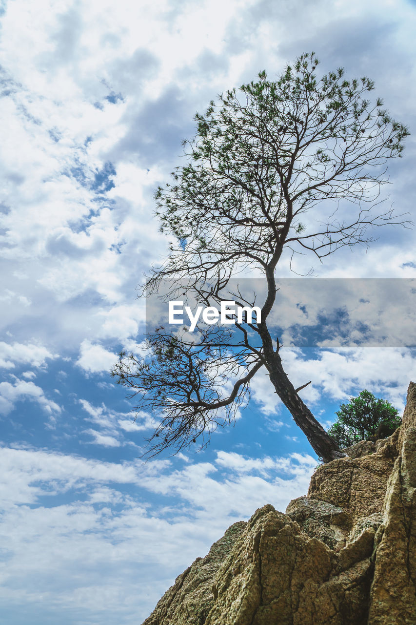 cloud - sky, sky, tree, beauty in nature, plant, low angle view, tranquility, nature, rock, scenics - nature, tranquil scene, rock - object, no people, day, solid, branch, non-urban scene, outdoors, bare tree, growth