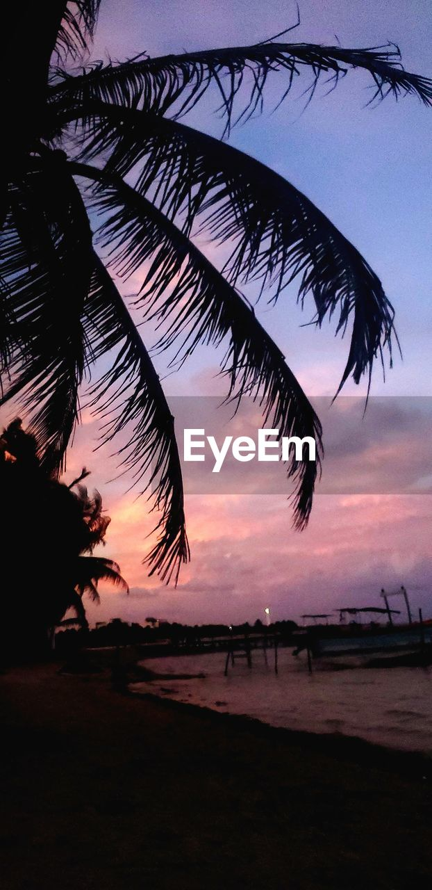 sunset, sky, tree, silhouette, tropical climate, palm tree, plant, beauty in nature, nature, tranquility, beach, tranquil scene, land, scenics - nature, water, sea, cloud - sky, outdoors, growth, no people, palm leaf