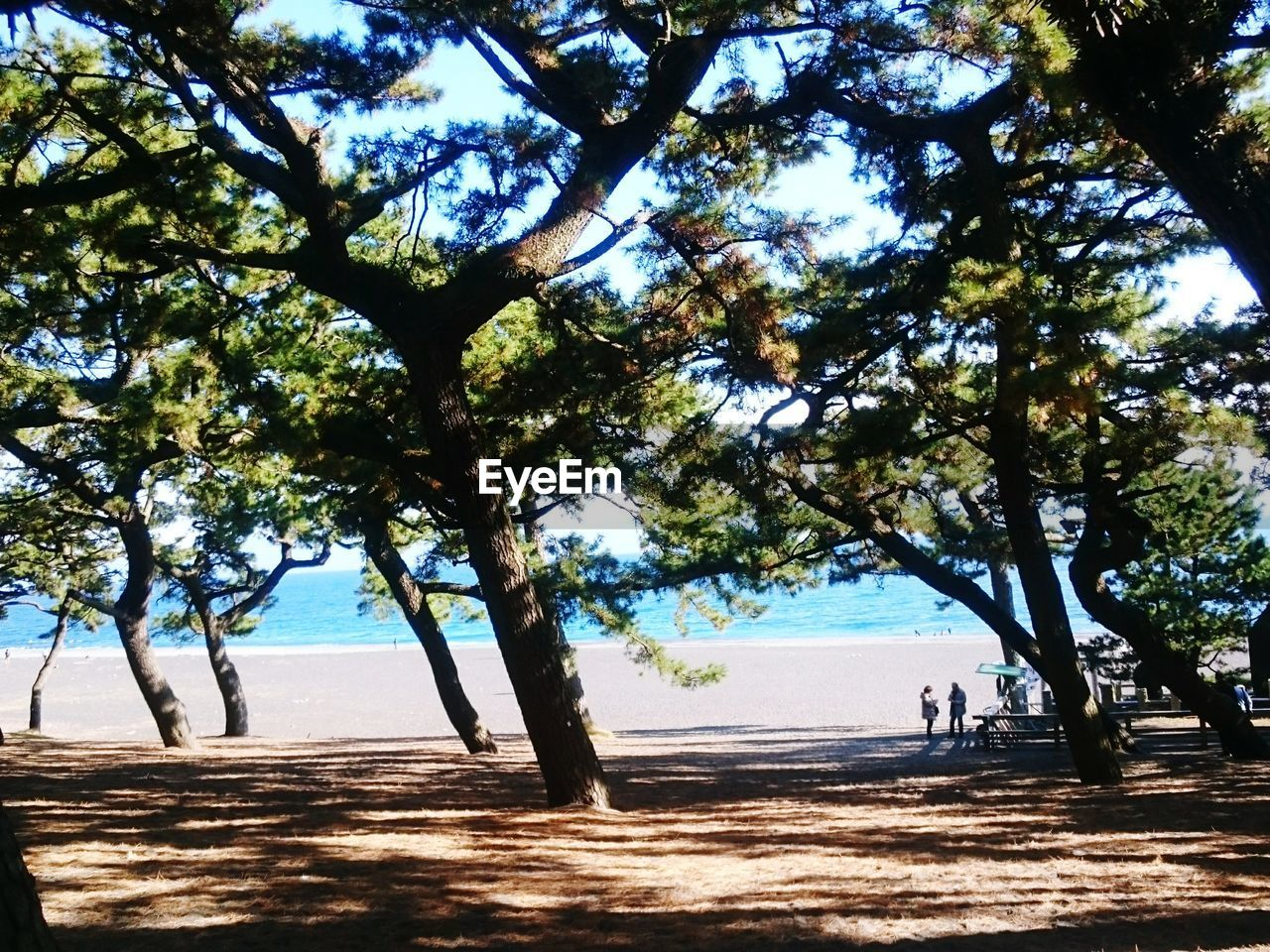 beach, tree, sea, nature, scenics, beauty in nature, water, day, sunlight, outdoors, tranquil scene, tranquility, sand, growth, tree trunk, horizon over water, branch, sky, no people