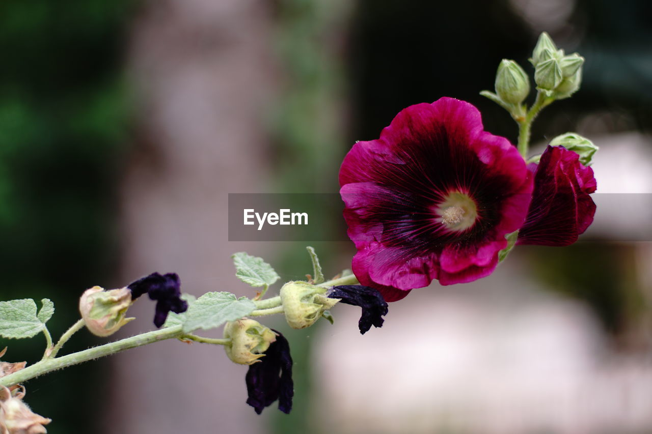 flowering plant, flower, fragility, vulnerability, beauty in nature, plant, freshness, petal, flower head, growth, inflorescence, focus on foreground, close-up, nature, day, animals in the wild, no people, bee, invertebrate, animal wildlife, pollination, pollen, purple