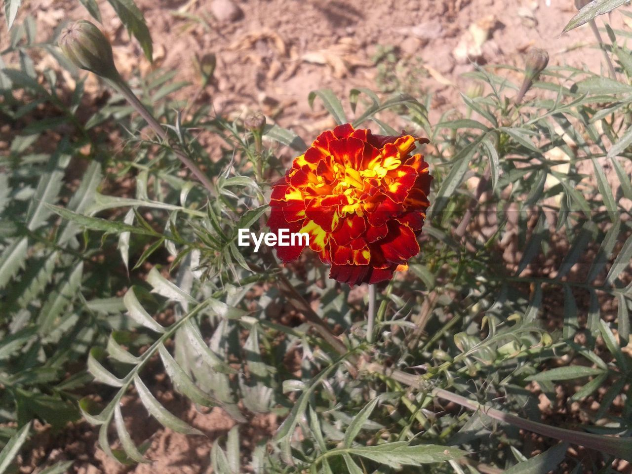 flower, growth, high angle view, plant, petal, blooming, red, nature, freshness, no people, flower head, fragility, beauty in nature, day, outdoors, close-up