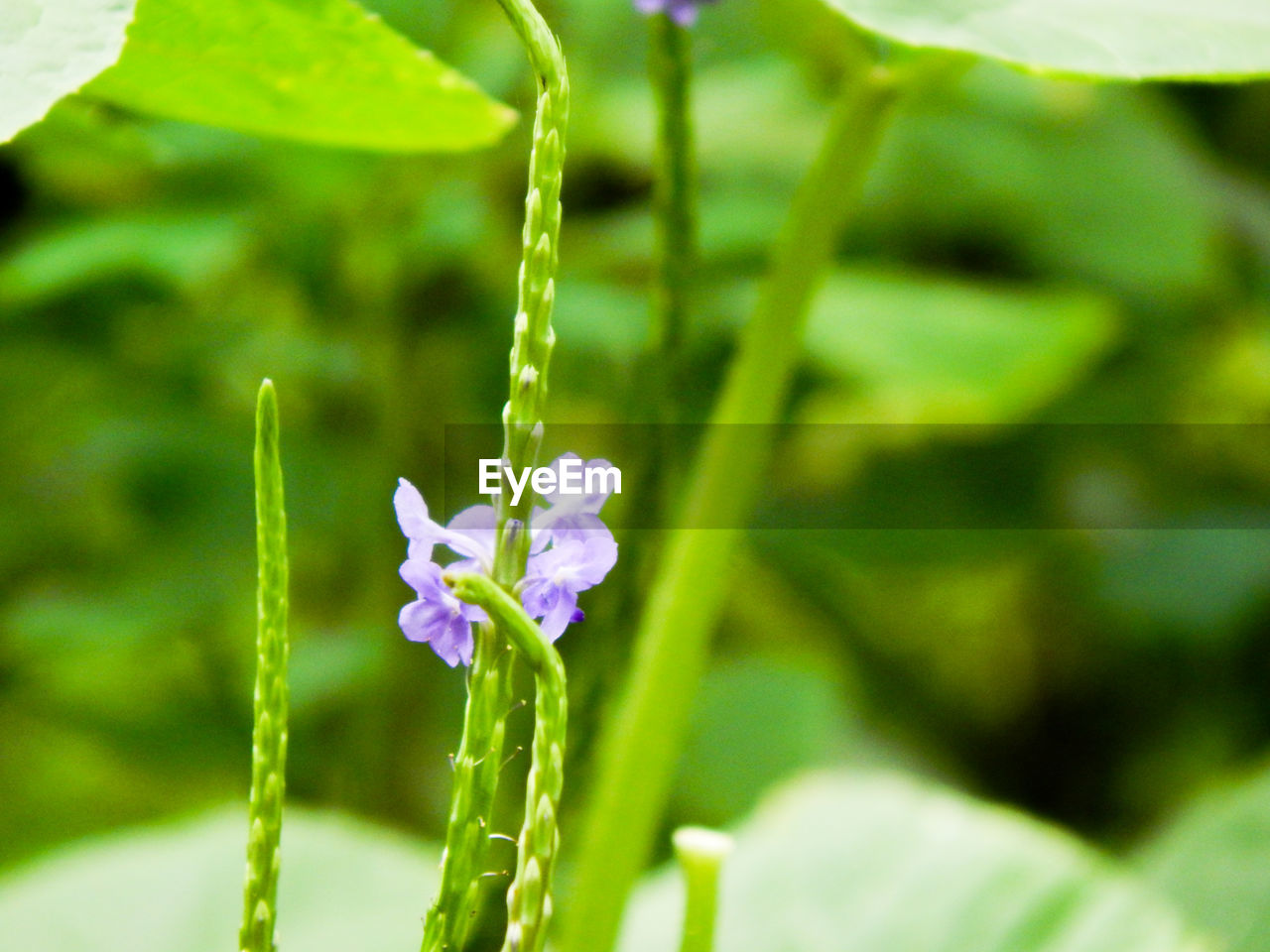 nature, growth, flower, plant, green color, beauty in nature, fragility, day, no people, outdoors, freshness, close-up, blooming, flower head