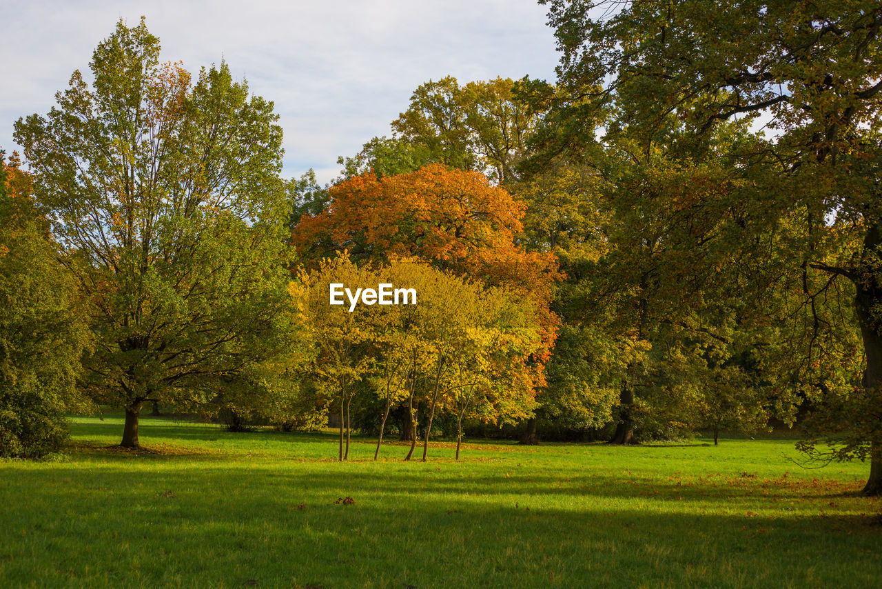 Trees On Field Against Sky During Autumn