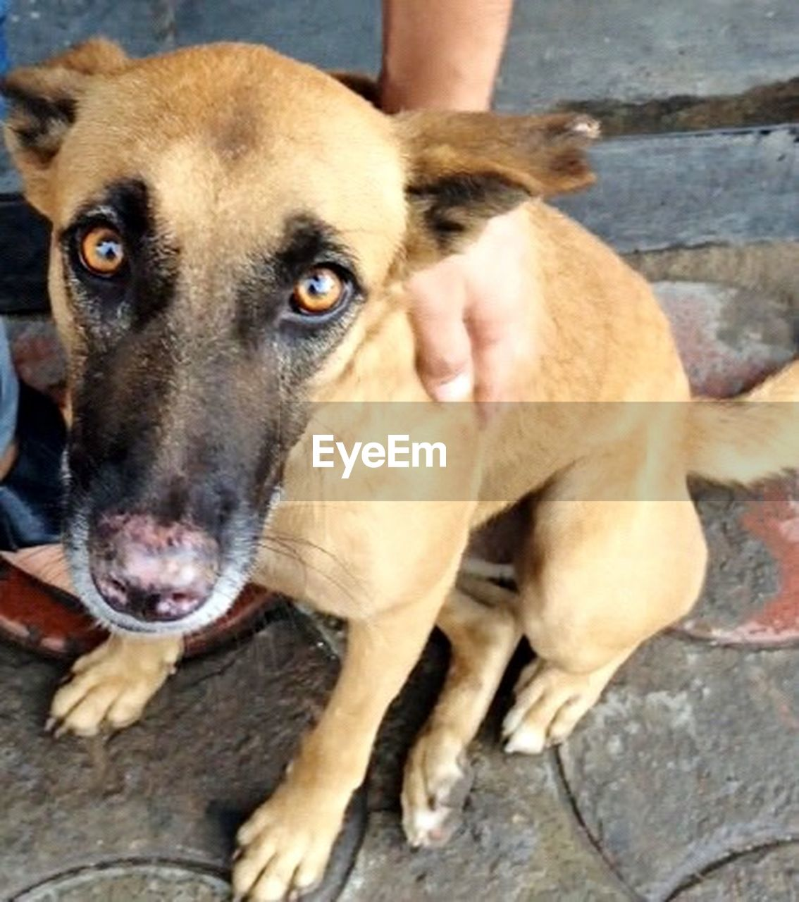 dog, pets, one animal, animal themes, domestic animals, day, outdoors, portrait, mammal, looking at camera, close-up, human body part, human hand, one person, people