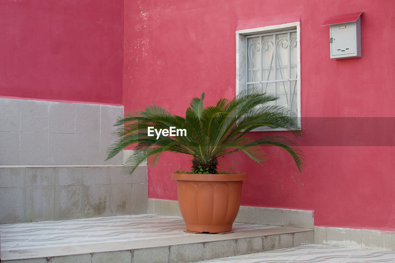 potted plant, plant, architecture, growth, built structure, building exterior, wall - building feature, wall, nature, no people, window, building, outdoors, red, house, day, pink color, leaf, plant part, door, houseplant, flower pot