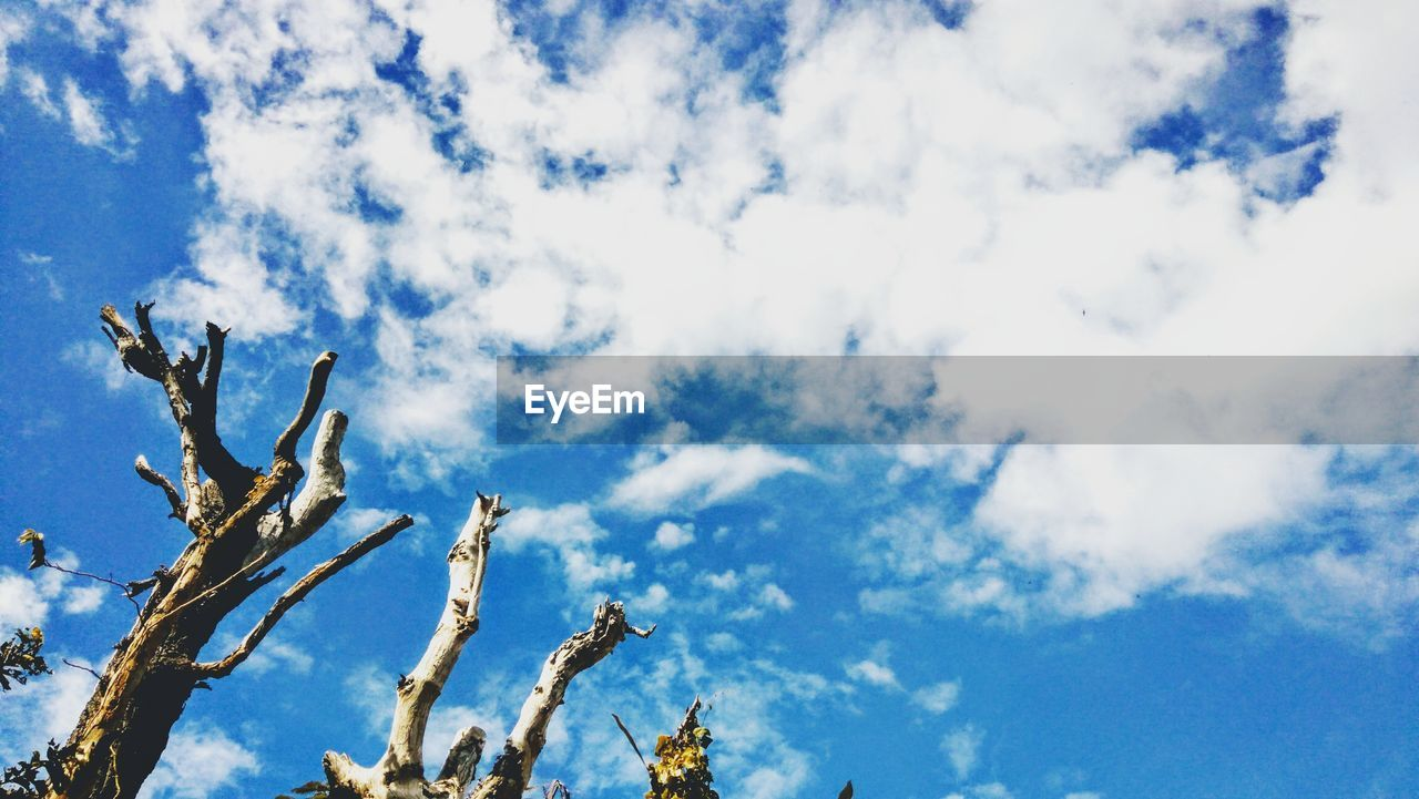 sky, cloud - sky, low angle view, tree, plant, day, beauty in nature, nature, no people, branch, tranquility, growth, blue, outdoors, scenics - nature, bare tree, tranquil scene, sunlight, white color, non-urban scene