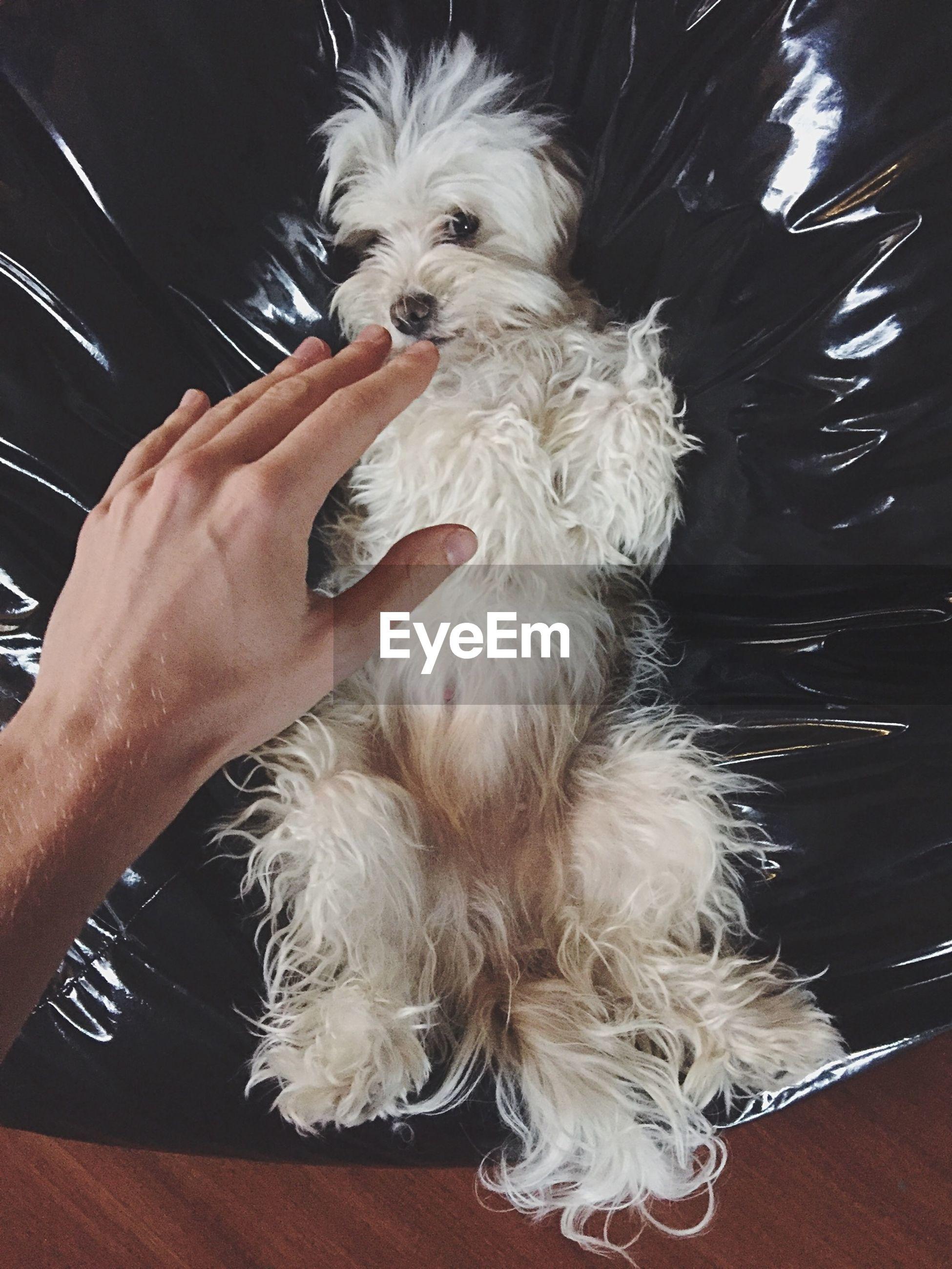 Close-up of hand touching dog