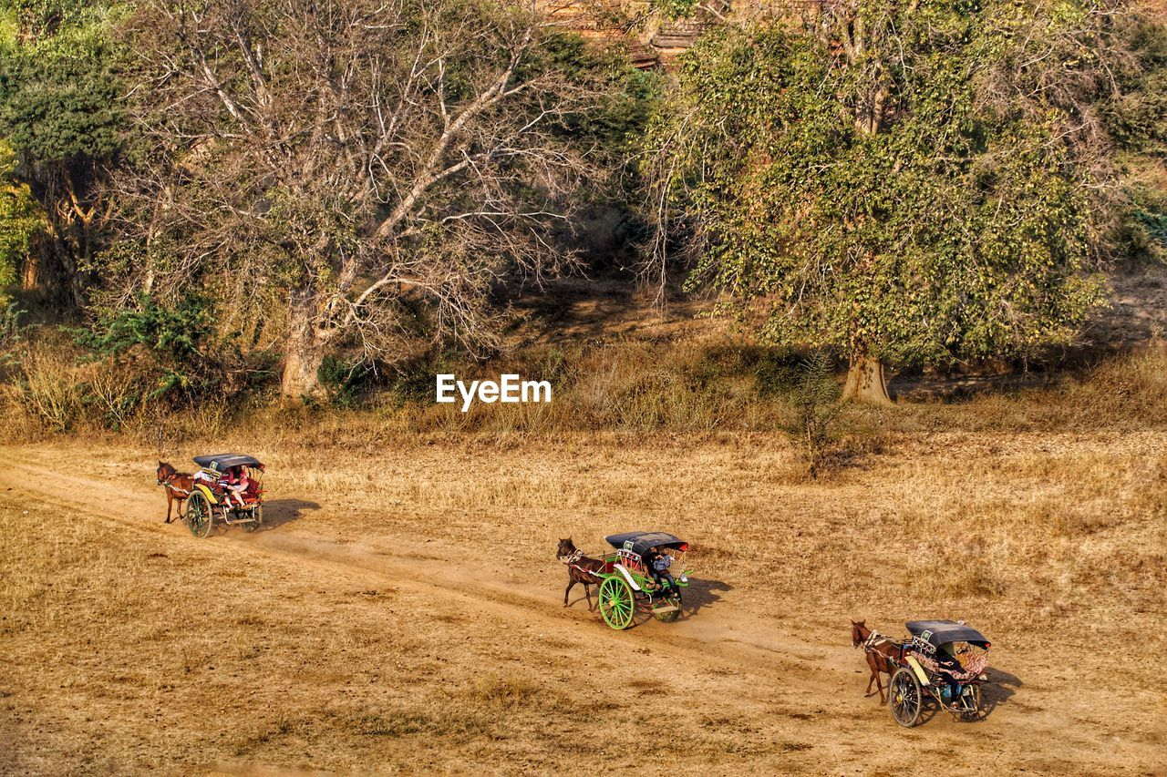 transportation, plant, mode of transportation, riding, mammal, nature, land, tree, ride, motion, people, day, sport, landscape, field, domestic animals, group of people, men, outdoors