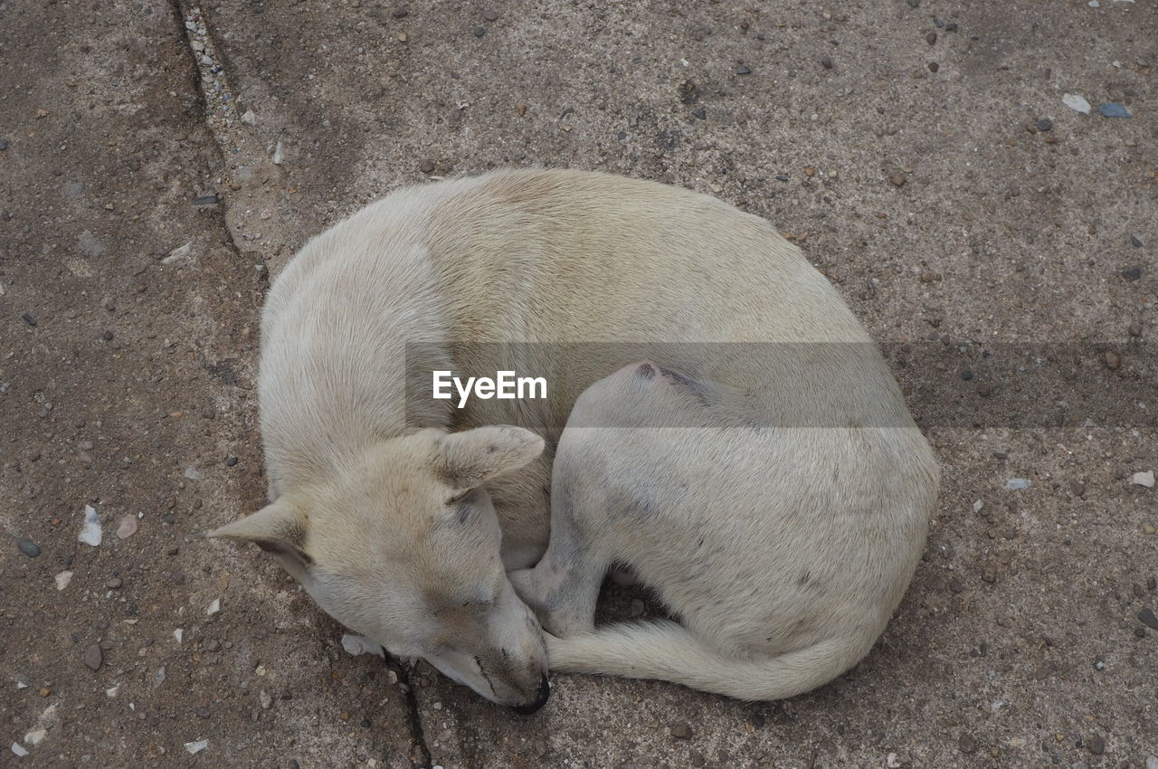 animal themes, mammal, animal, group of animals, two animals, high angle view, vertebrate, sleeping, domestic, no people, relaxation, pets, domestic animals, togetherness, young animal, animal wildlife, canine, eyes closed, resting, animal family