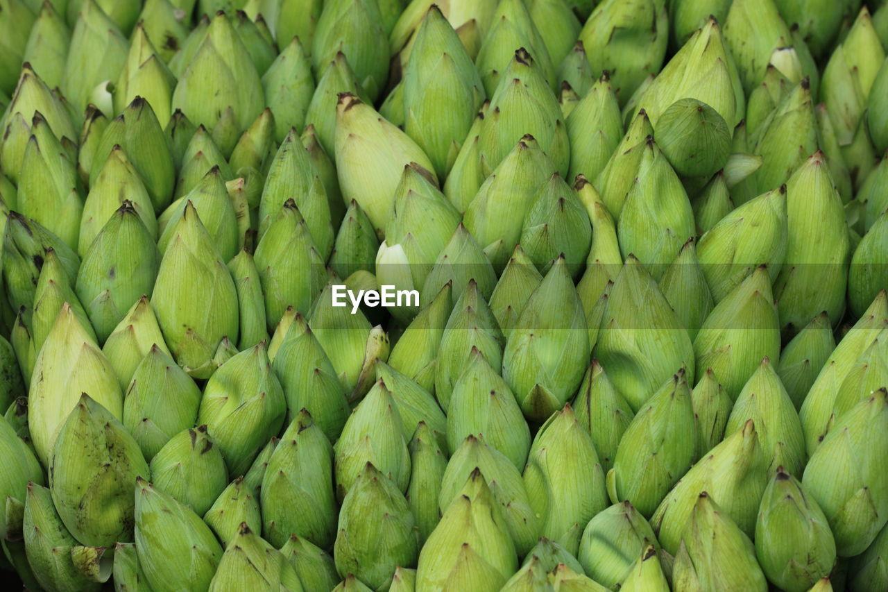 Detail Shot Of Corn Cobs