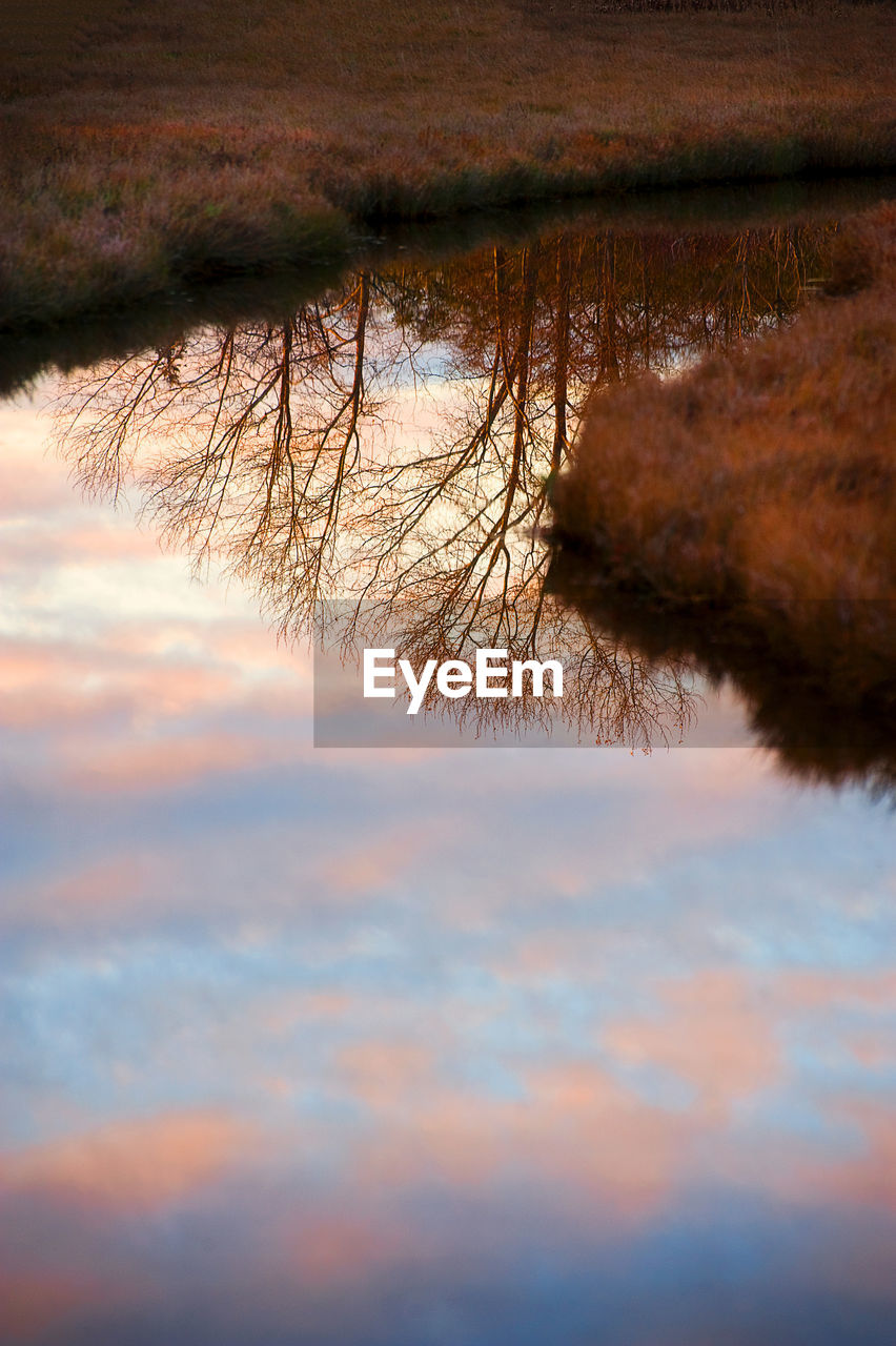 sky, tranquility, plant, beauty in nature, no people, nature, water, scenics - nature, tree, tranquil scene, cloud - sky, sunset, day, land, growth, outdoors, non-urban scene, selective focus, lake