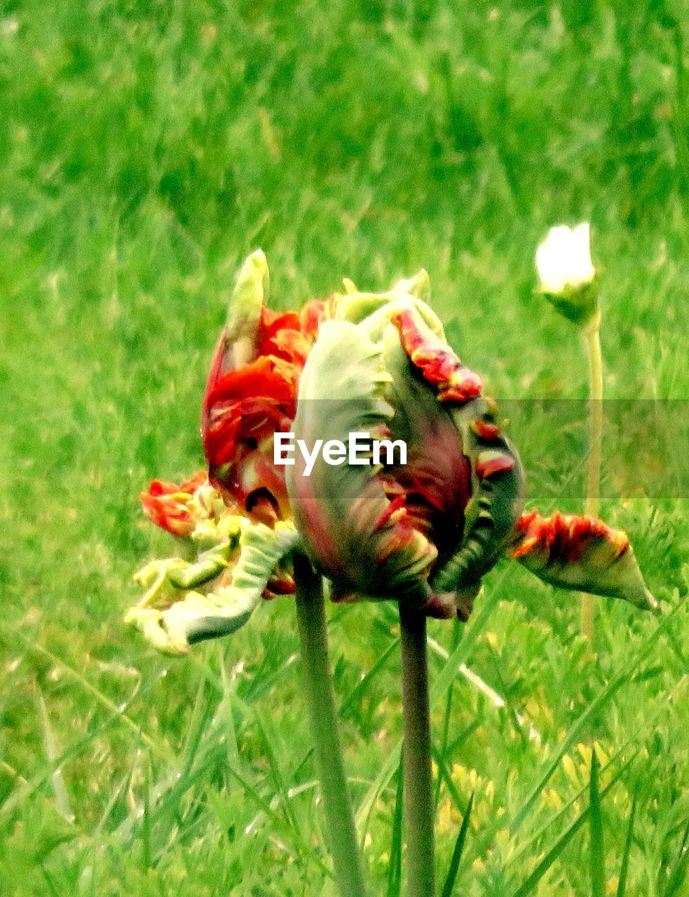 Close up of flower bud