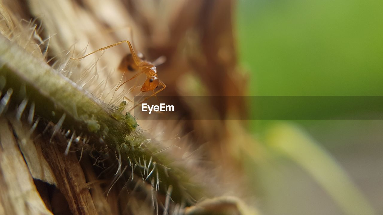 invertebrate, insect, animal wildlife, animals in the wild, animal themes, animal, one animal, close-up, selective focus, plant, day, nature, no people, green color, zoology, outdoors, plant part, arthropod, leaf, focus on foreground, animal eye