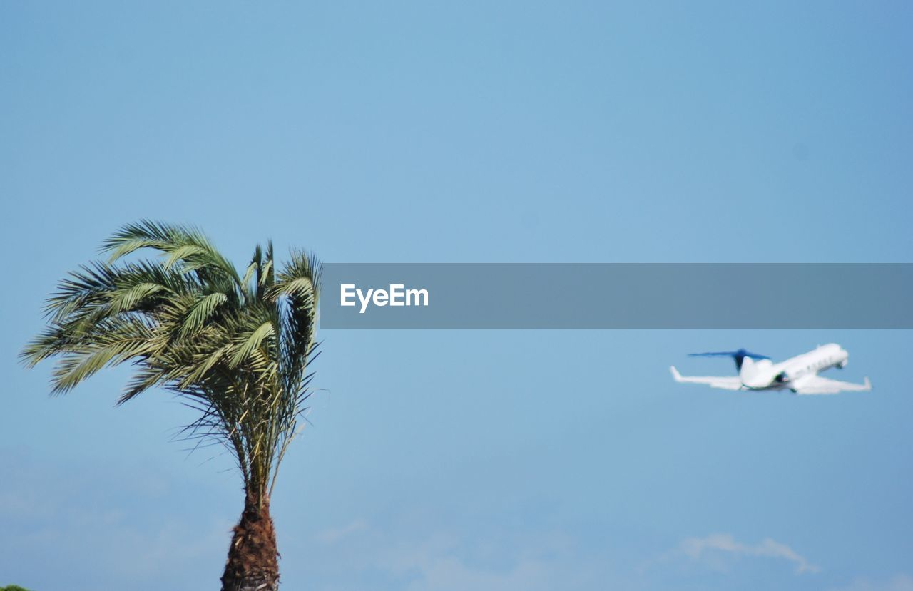 Low angle view of palm tree and airplane against clear sky