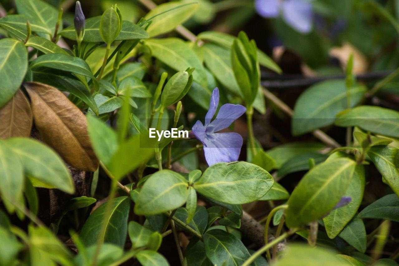 Flower amid leaves
